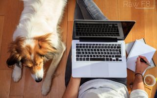 Work at home jobs for pet lovers are in demand now more than ever